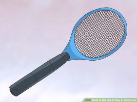 prevenir-mosquitos-casa